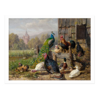 Colorful Fowl by Carl Jutz Postcard