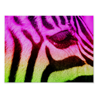 Colorful Funky Zebra Face Poster