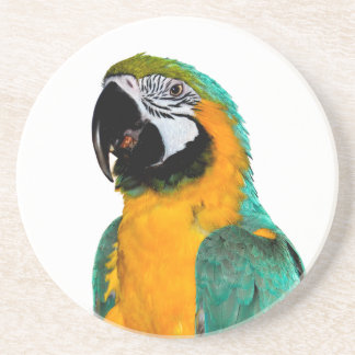 colorful gold teal macaw parrot bird portrait coaster
