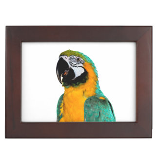 colorful gold teal macaw parrot bird portrait keepsake box