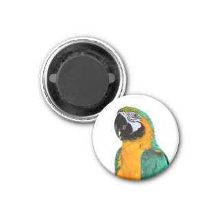 colorful gold teal macaw parrot bird portrait magnet