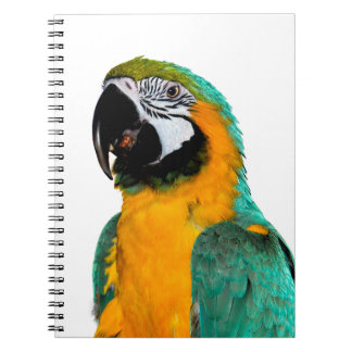 colorful gold teal macaw parrot bird portrait notebook