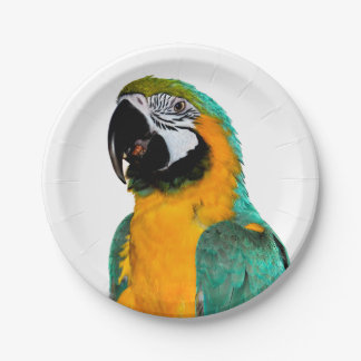 colorful gold teal macaw parrot bird portrait paper plate