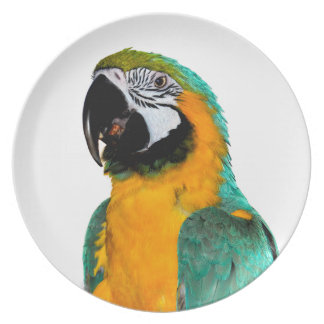 colorful gold teal macaw parrot bird portrait plate