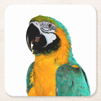 colorful gold teal macaw parrot bird portrait square paper coaster