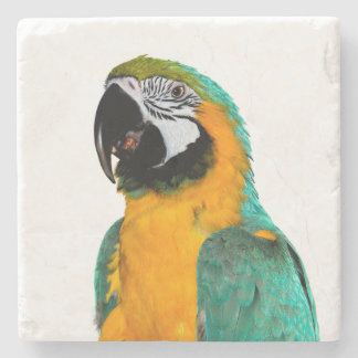 colorful gold teal macaw parrot bird portrait stone coaster