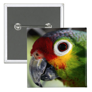 Colorful Green Red Yellow Parrot Gifts Pins