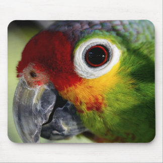 Colorful Green Red Yellow Parrot Gifts Mouse Pad