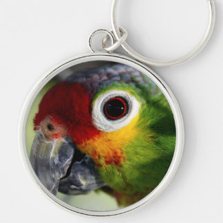 Colorful Green Red Yellow Parrot Gifts Silver-Colored Round Key Ring