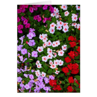 Colorful Impatiens Card