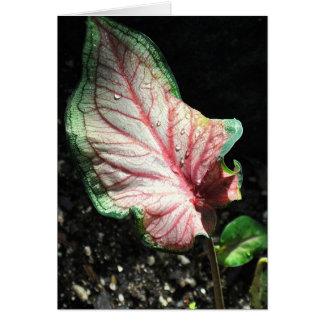 Colorful Leaf Greeting Card