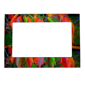 Colorful Leaf Magnetic Frame
