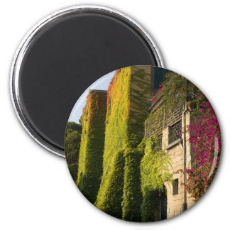 Colorful leaves on house walls magnet