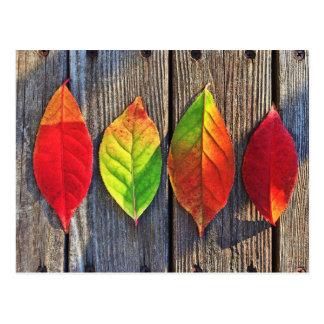 Colorful leaves postcard