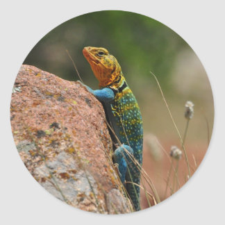Colorful Lizard Classic Round Sticker