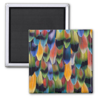 Colorful lovebird parrot feathers square magnet