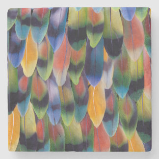 Colorful lovebird parrot feathers stone coaster