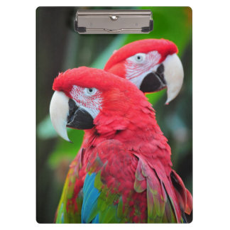 Colorful macaw parrots clipboard