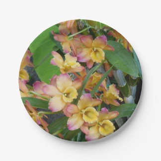 Colorful Orchids Paper Plates