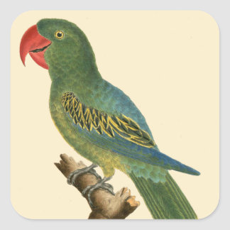 Colorful Parrot Art Square Sticker