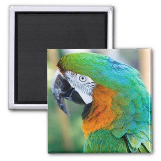Colorful Parrot Magnet