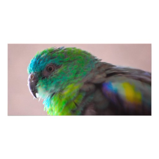 Colorful-parrot-plumage707 PARROT BIRD EXOTIC TEAL Picture Card
