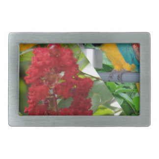 Colorful parrots enjoy looking at each other belt buckles