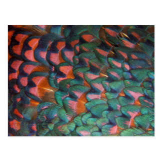 Colorful Pheasant Feathers Abstract Postcard