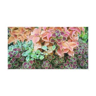 Colorful Rainbow Coleus Plants Photograph Canvas Print