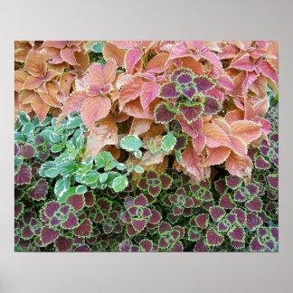 Colorful Rainbow Coleus Plants Photograph Poster