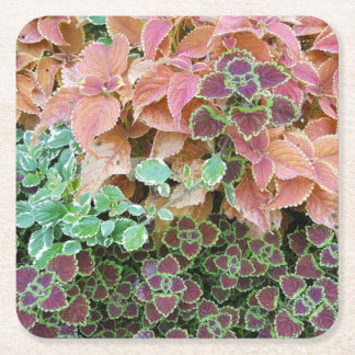 Colorful Rainbow Coleus Plants Photograph Square Paper Coaster