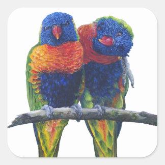 Colorful Rainbow Lorikeets parrots Square Sticker