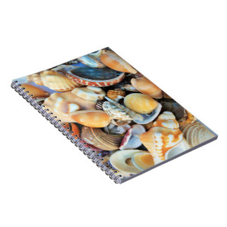 Colorful Sea Shells Notebook