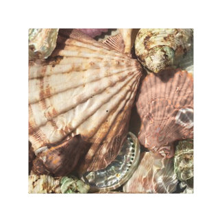 Colorful Seashell Collection Wrapped Canvas