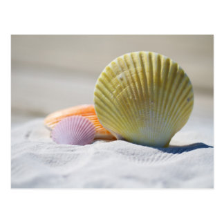 Colorful Seashells in the Sand Postcard