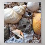 Colorful Seashells Print