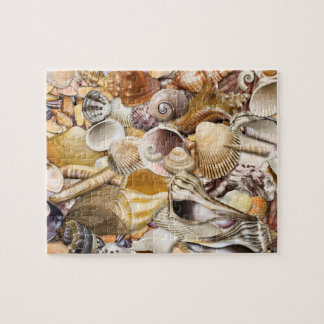 Colorful Seashells Puzzle