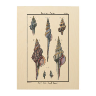 Colorful Seven Seashells Wood Print