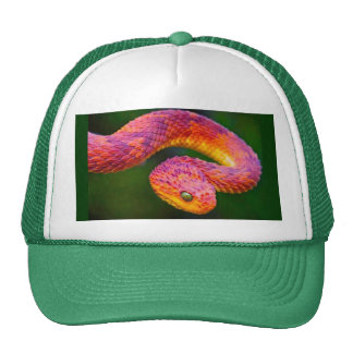 colorful snake cap