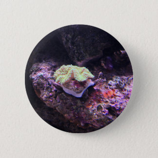 Colorful Soft Coral And Live Rocks 6 Cm Round Badge