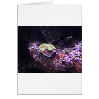Colorful Soft Coral And Live Rocks Card