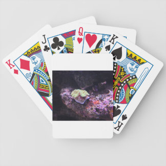 Colorful Soft Coral And Live Rocks Poker Deck