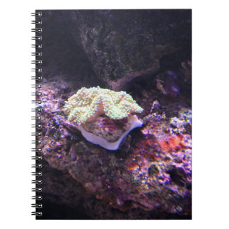 Colorful Soft Coral And Live Rocks Spiral Notebook