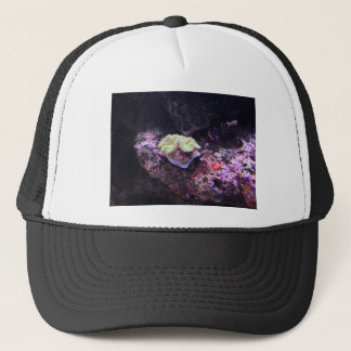 Colorful Soft Coral And Live Rocks Trucker Hat