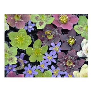 Colorful spring helleborus flowers pattern postcard