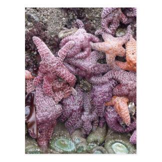 Colorful Star Fish Postcard
