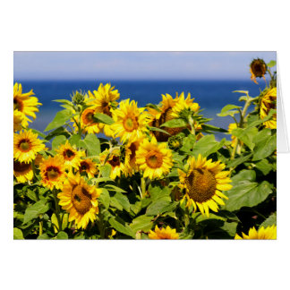 Colorful sunflower in bloom card