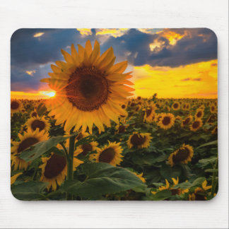 Colorful Sunflowers in a Field Mouse Pads