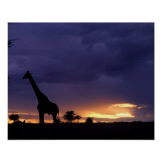 Colorful sunset late afternoon image of safari poster