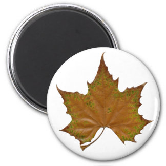 colorful sycamore leaf 6 cm round magnet